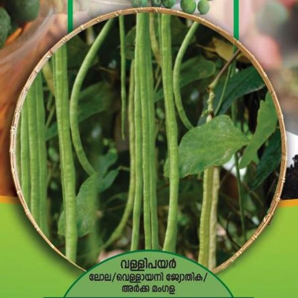 Cowpea (Trailing) Seeds