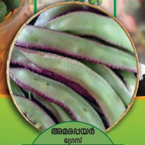 Dolichus Beans Seeds