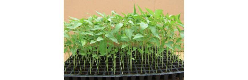 Planting Materials