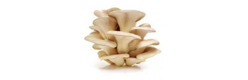 Mushroom Spawns